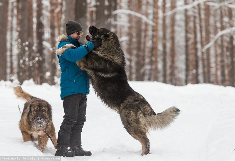 Пушистые символы 2018 года: истории уникальных собак Томска