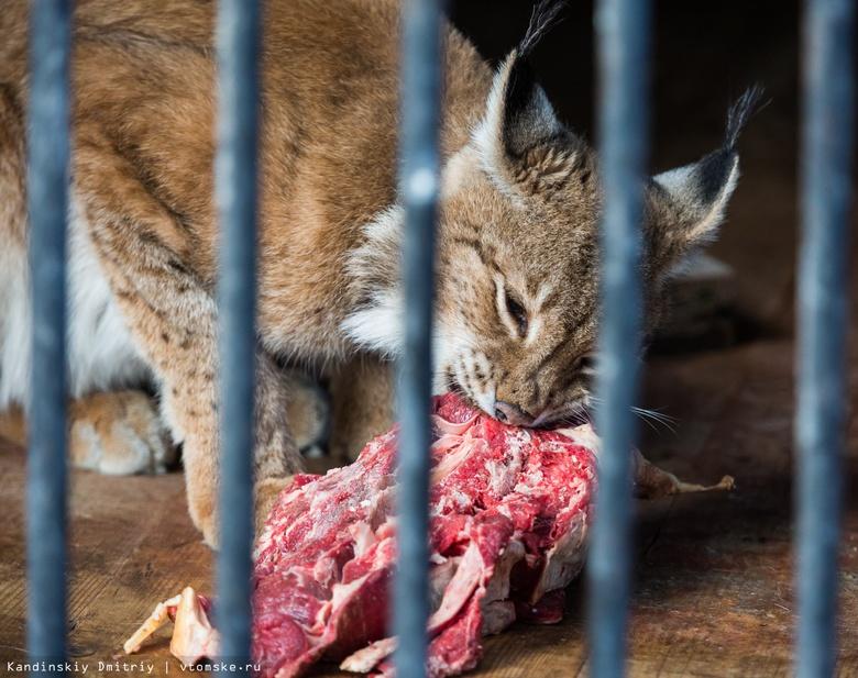 Животных северского зоопарка перевели на дробное питание из-за морозов