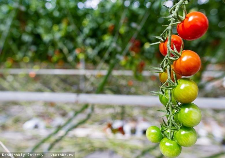 Томским фермерам выделили 90 млн руб господдержки на покупку техники