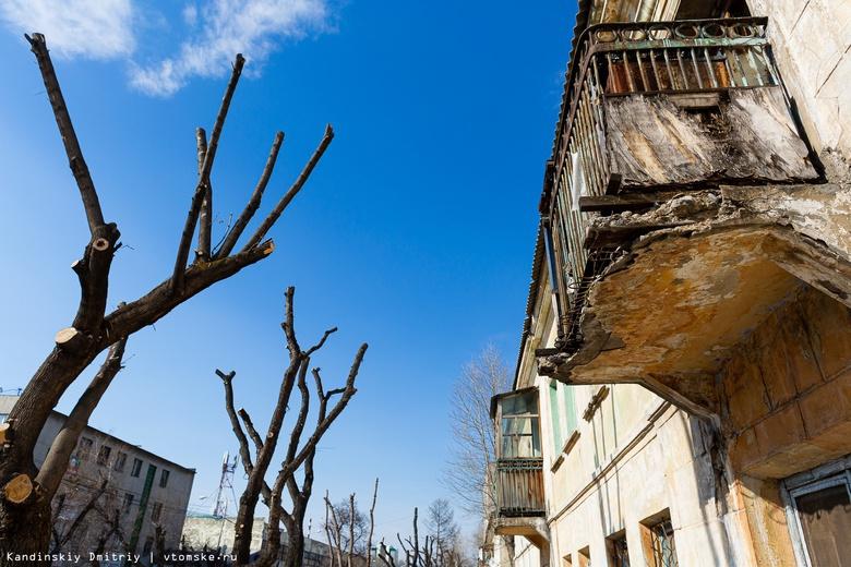 Деревья-обрубки на улицах Томска