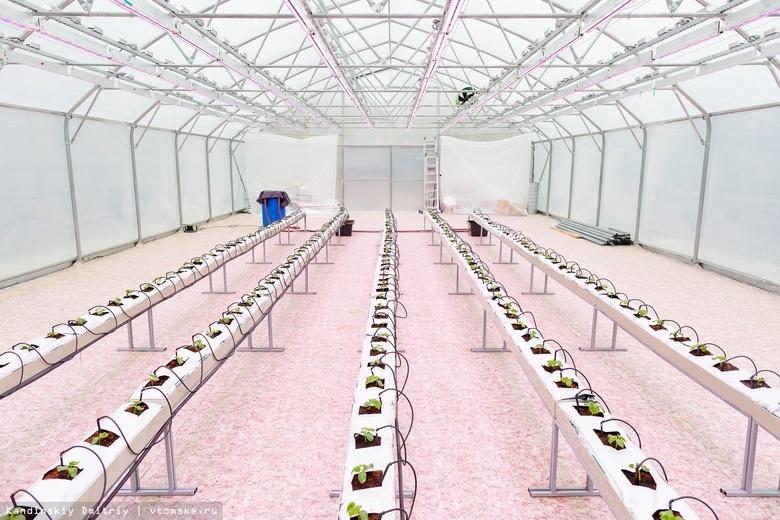 Студенты из разных стран разработают дизайн многоярусной сити-фермы на конкурсе в ТПУ