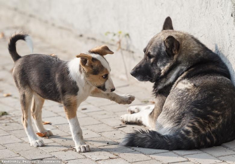 «Верный друг»: стаи собак возле томской ОКБ появляются из-за постоянного прикорма