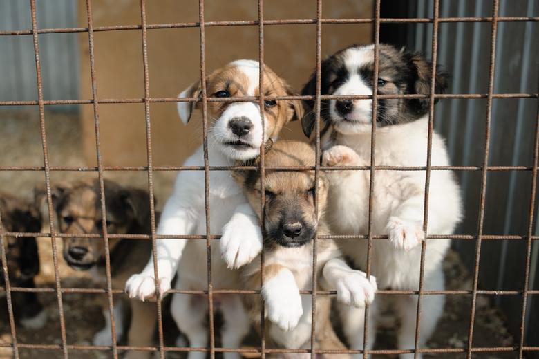 Ищу хозяина: как собаки из томского приюта находят семью