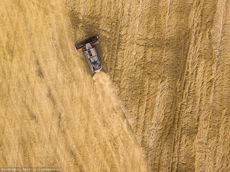 Биологи помогут томским фермерам вдвое увеличить урожай пшеницы