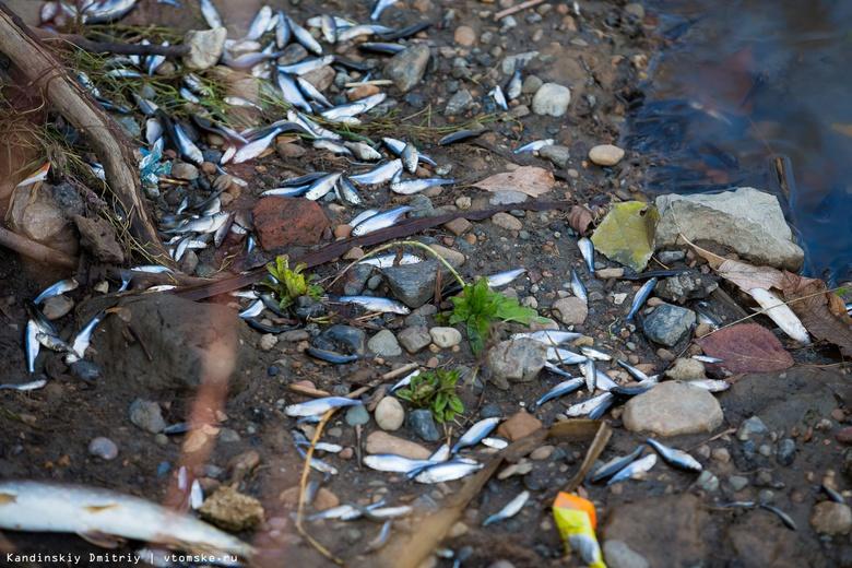 Росрыболовство: «Томскводоканал» виновен в гибели рыбы и загрязнении 2 томских озер