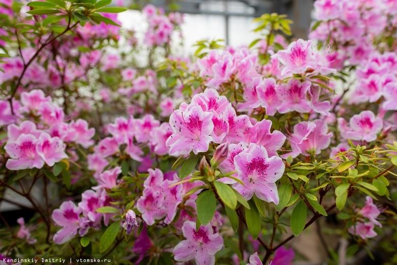 У редких растений в томском ботсаду появятся опекуны
