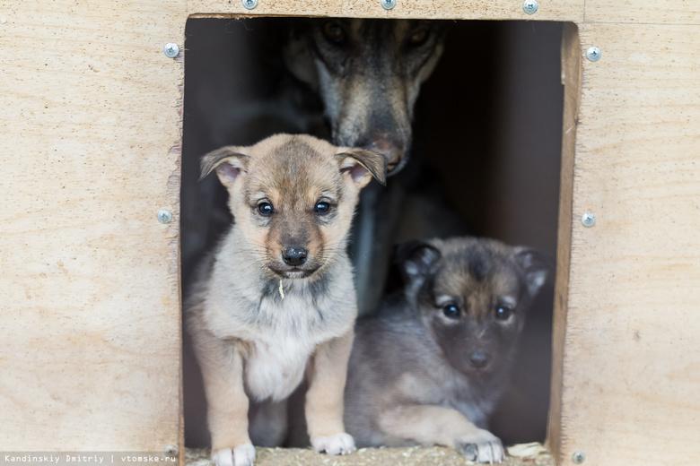 Более 600 собак находятся в пункте передержки «Верного друга» под Томском
