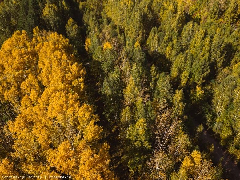 Кратковременное потепление ожидается в Томской области