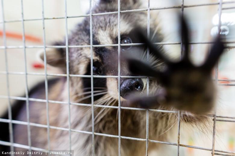 Животные скучают: как живет мини-зоопарк Томска во время пандемии