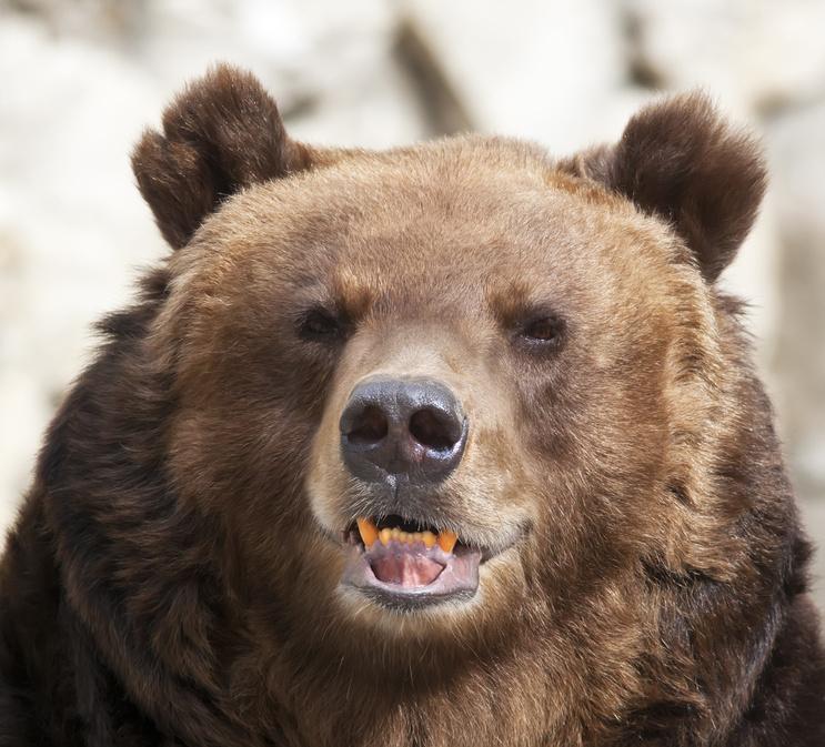 Охотоведы караулят медведя, угрожающего жизни рыбаков