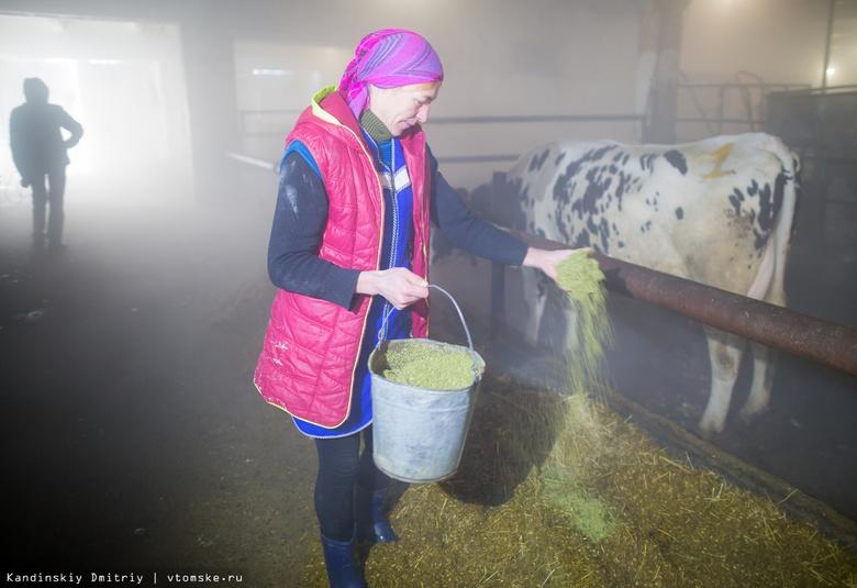 Более 1 тыс елей собрали томичи за 2 недели на витаминный корм коровам