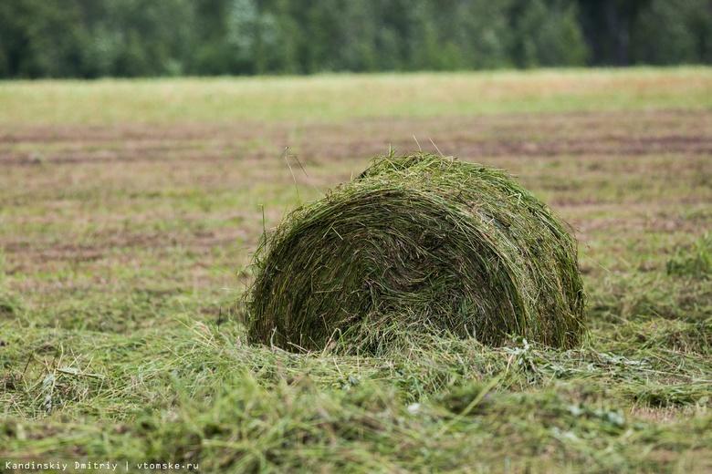 Темпы кормозаготовки в Томской области превышают прошлогодние в 14,5 раза