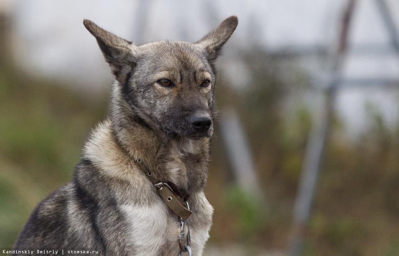 В троллейбусах Томска появятся фото собак, которых забрали из пункта передержки