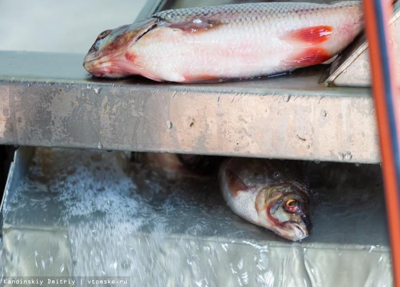 Полиция зафиксировала снижение числа браконьеров на томских реках