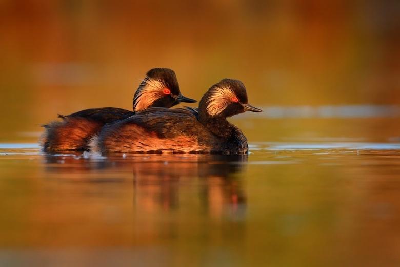 Красную книгу Томской области предлагают пополнить 50 видами редких животных и растений