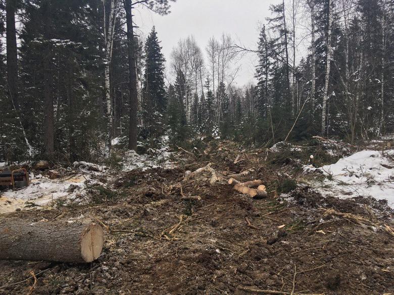 УМВД возбудило дело в отношении арендатора участка в Батурино, где велась рубка леса