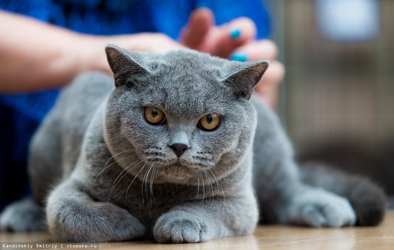 В России впервые выявили коронавирус у кошки