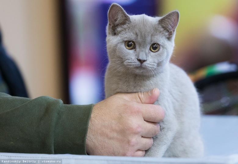 Жительница Копылово получила срок за мучение котенка на глазах детей