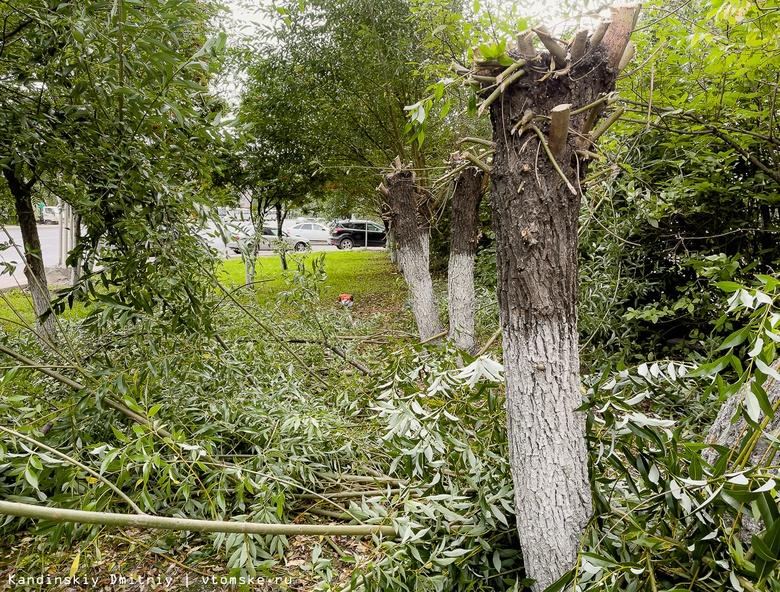 Зеленый компромисс: энергетики и дендрологи обсудили обрезку деревьев в Томске