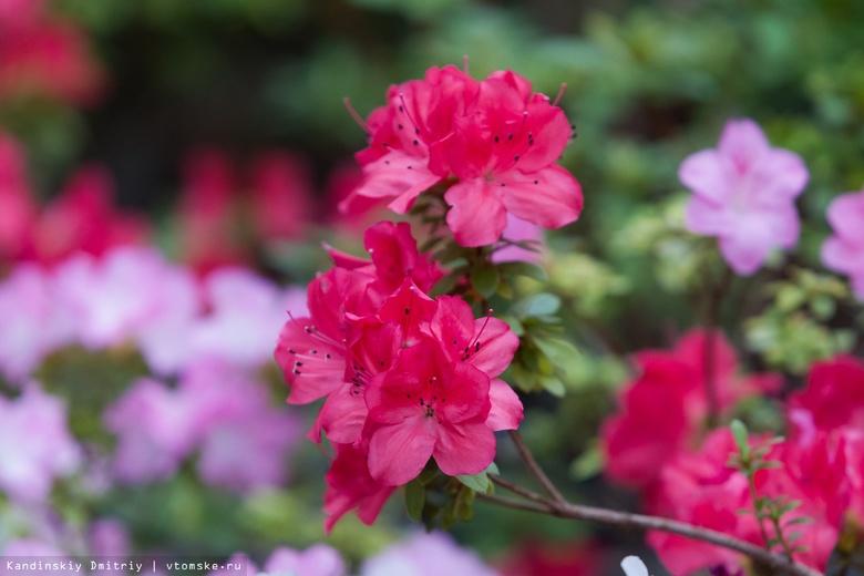 Выставка декоративных цветов открылась в ботаническом саду Томска