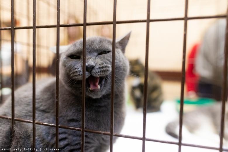 Более 1 тыс кошек и собак нашли новый дом на ярмарках «Содружества» за 8 лет