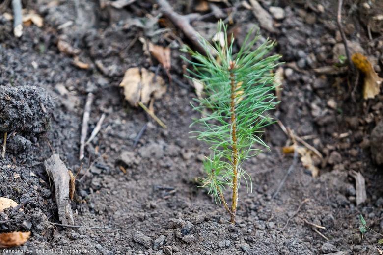 Более 7 тыс саженцев деревьев и кустарников высадят осенью в Томске
