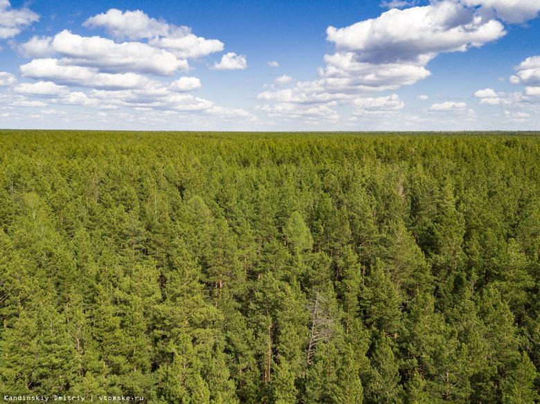 Обработка томских лесов от шелкопряда начнется позже из-за холодов