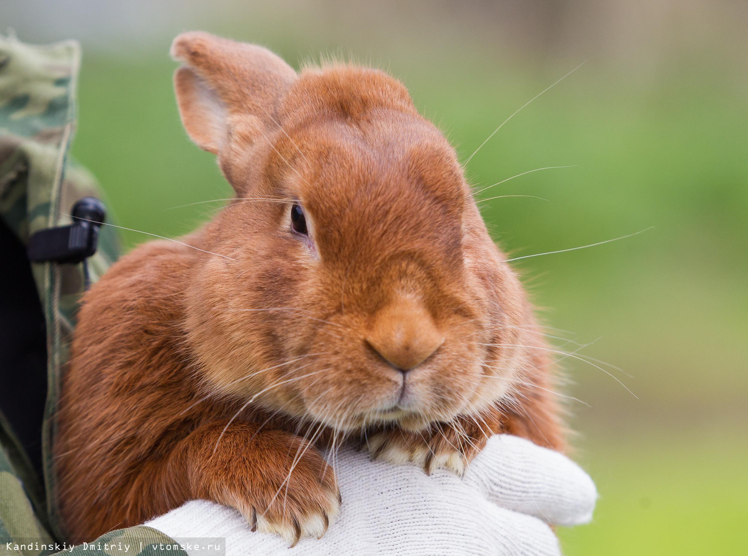 К чему снится ферма с кроликами