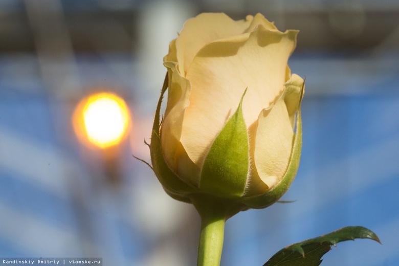 Как выбрать цветы к 8 Марта: советы Роспотребнадзора