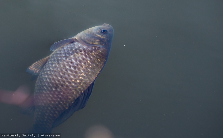 Уголовное дело возбуждено из-за загрязнения томских озер после аварии на ГНС