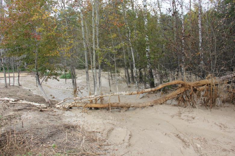 Более 8 млн заплатит нарушитель за слив стоков, навредивший деревьям в Томском районе