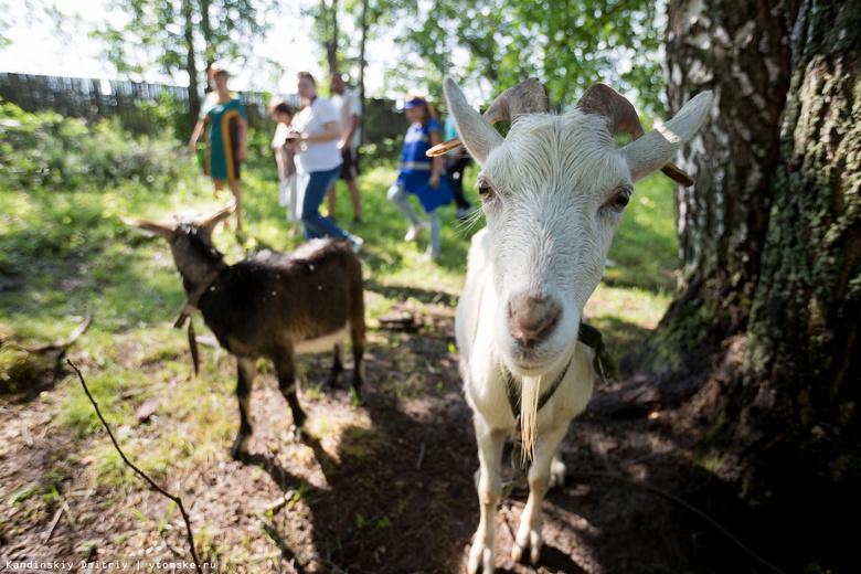 Поголовье коз в томских КФХ за 10 лет увеличилось более чем в 250 раз