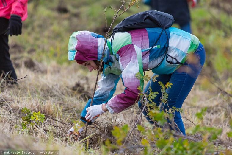 Томичи высадили на субботнике почти 6 тыс деревьев и кустарников