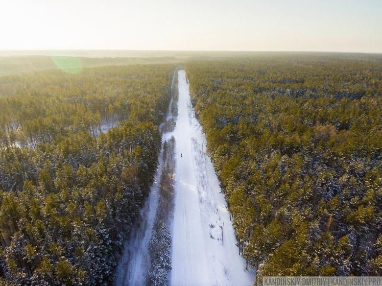 Ценные леса в Томской области начнут обрабатывать от шелкопряда в первую очередь