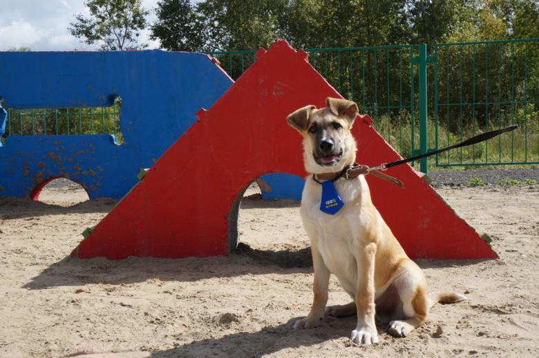 Первая площадка для выгула собак официально заработала в Томске