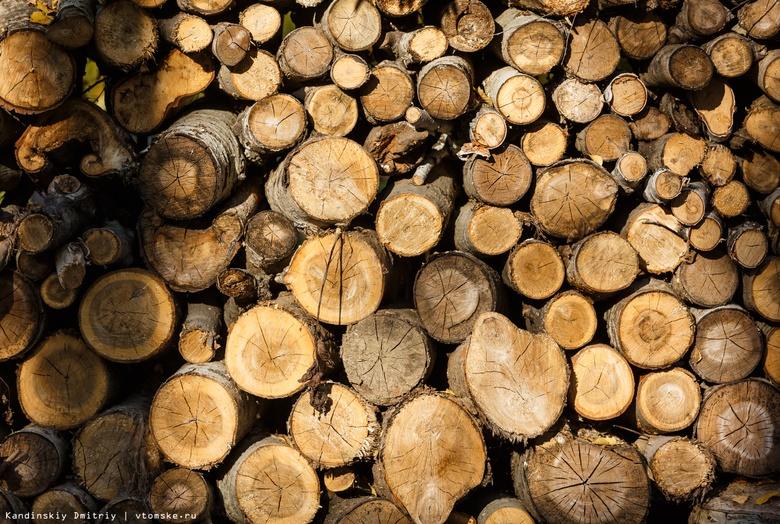 Пять «черных» лесорубов задержаны в Асино за уничтожение леса на 1 млн руб