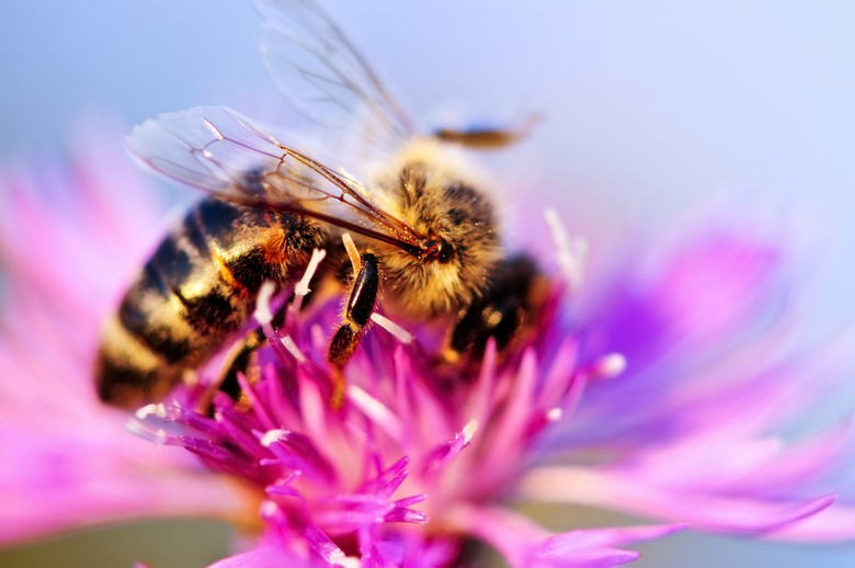 Ученые ТГУ научились определять поддельный мед по анализу пыльцы