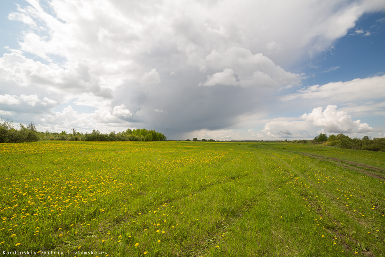 Экологи поймали ассенизатора, сливавшего сточные воды в поле Томского района