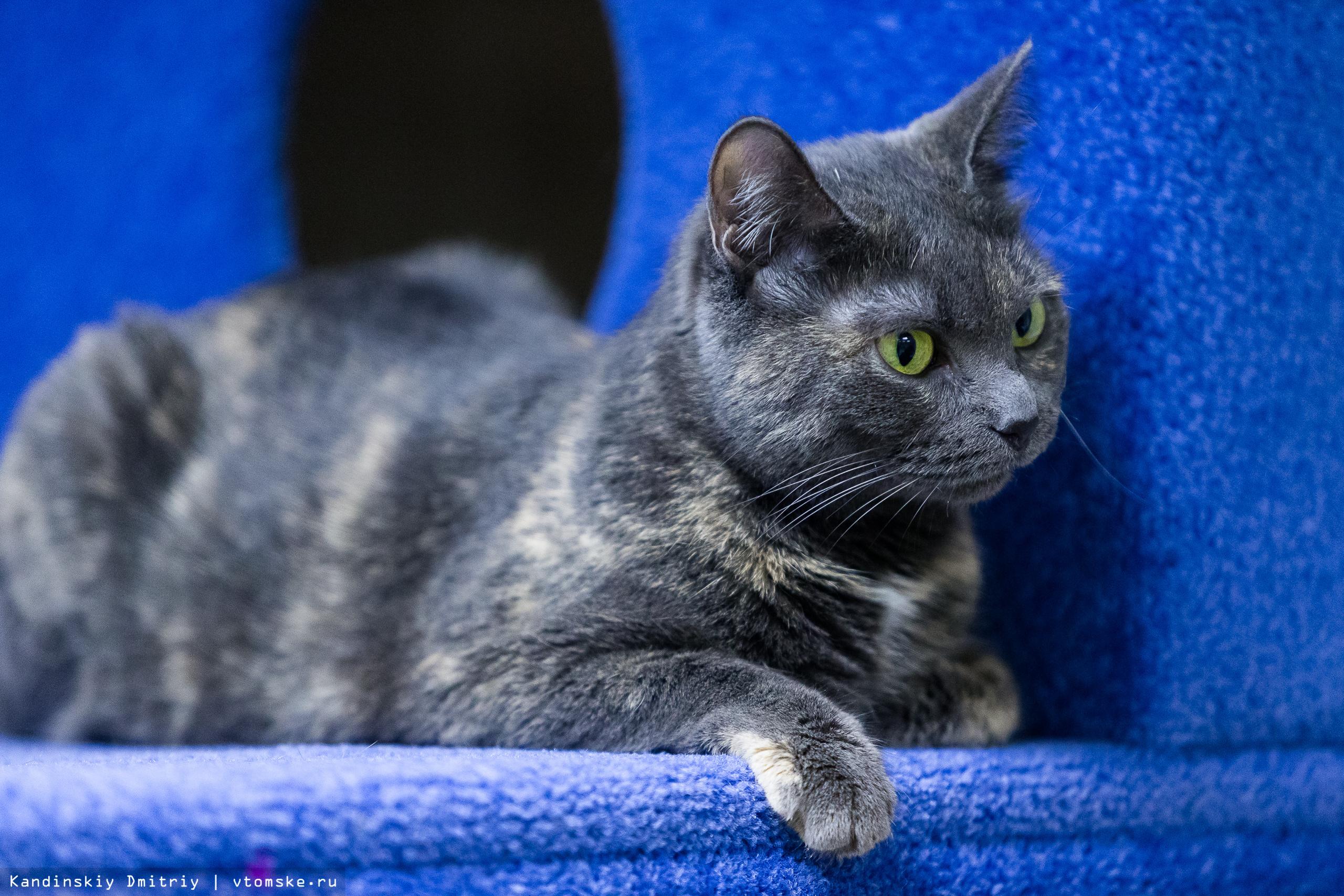 Мурчащее кафе: как люди и котики проводят время в томском Cat Space
