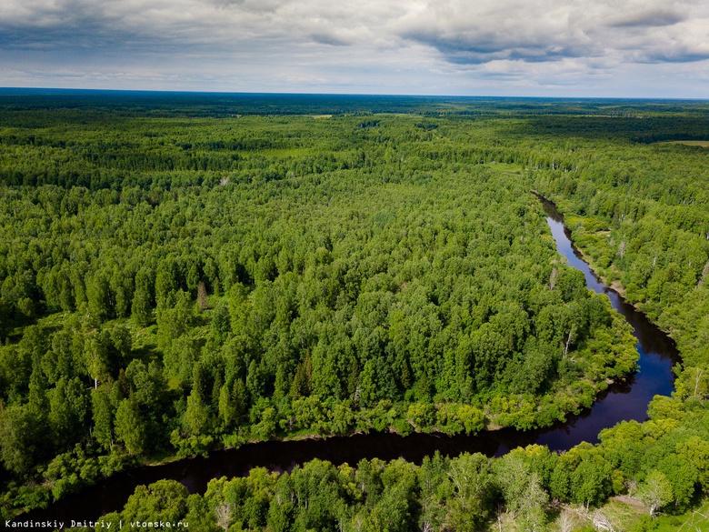 Более 25 тыс молодых деревьев высадят в томских лесничествах в мае