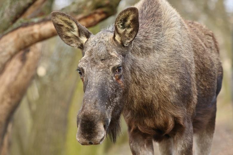 Охотоведы выявили 11 случаев браконьерства в Томской области с начала года