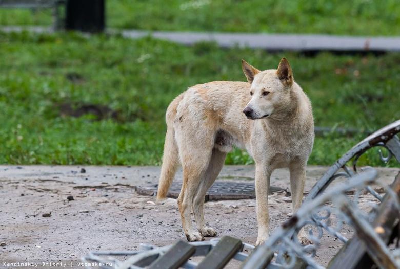 Около 900 жителей Томской области пострадали от укусов собак в 2021г