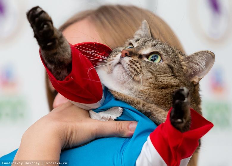 Капитан Америка и Чудо-женщина: томские коты стали супергероями