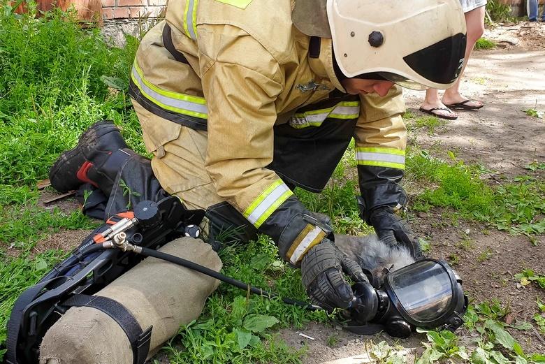 Пожарные провели реанимацию коту после пожара в жилом доме Томска