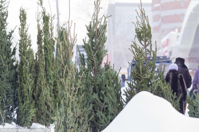 Томский лесхоз заготовит до 2 тысяч елей к Новому году