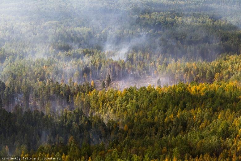 Площадь лесных пожаров в Томской области за год сократилась вдвое
