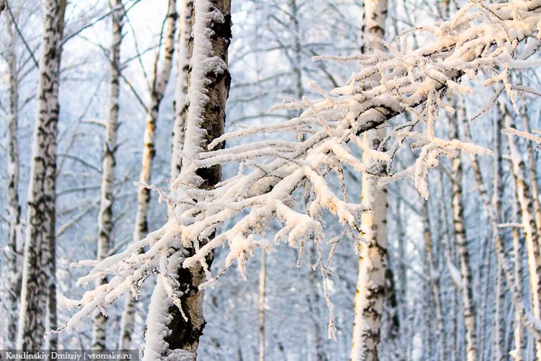Морозная погода ожидает томичей в первой декаде января