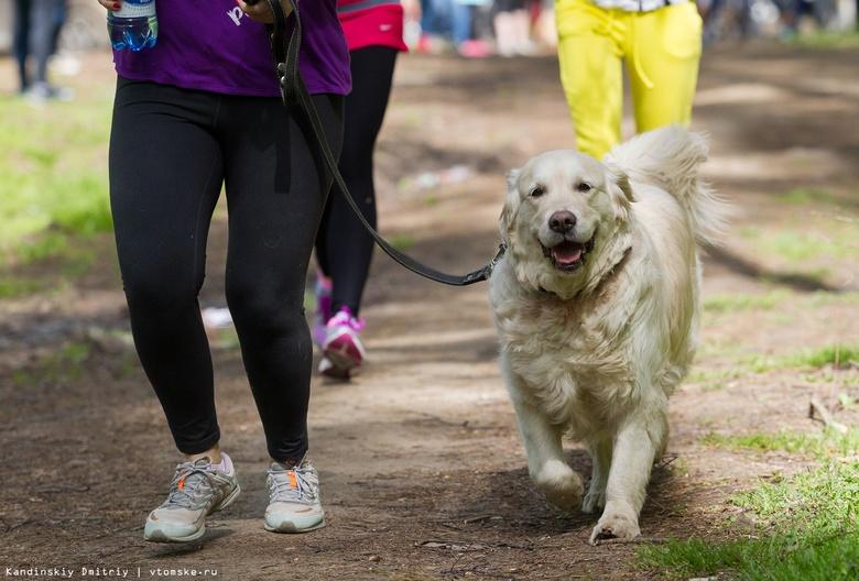 Новая площадка для выгула собак появится в Томске