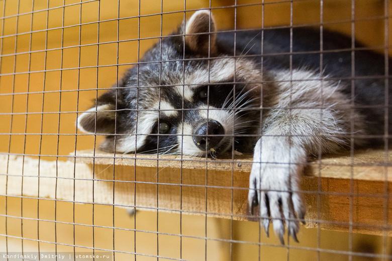 Запарка с зоопарком (фото)