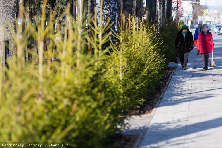 Обновленный мемориал и много елок: как выглядит Лагерный сад после ремонта